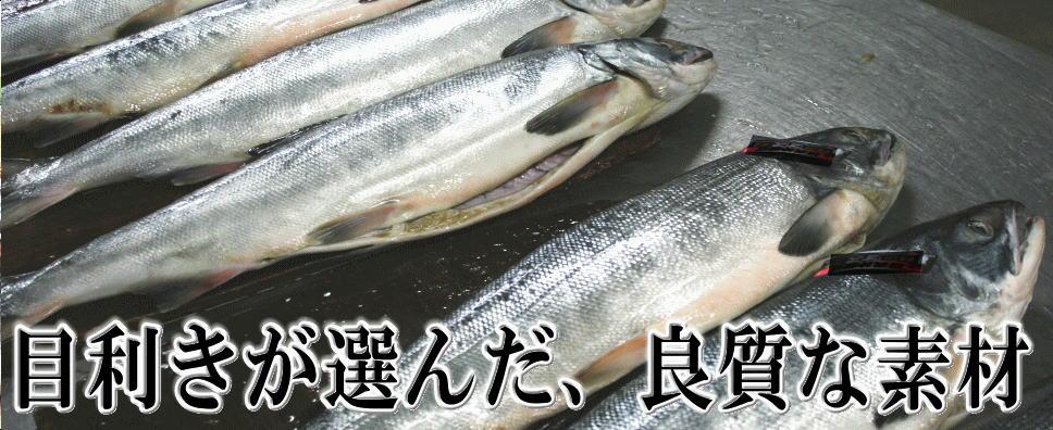 目利きが選定した鮭
